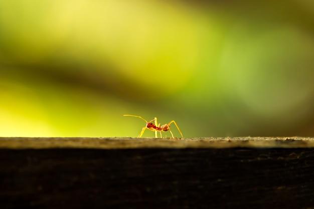 木と緑の自然な背景の上を歩く赤アリ。クローズアップとコピースペース。自然と環境の完全性。