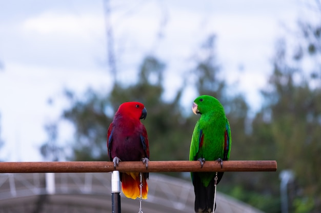 Красочный попугай