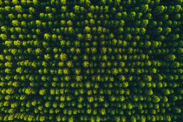 トップビューユーカリの木の森