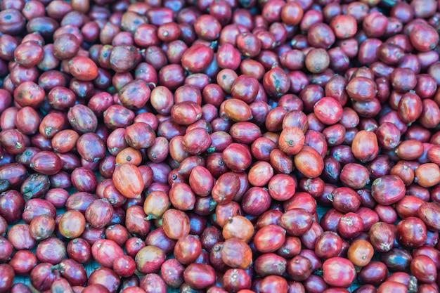 Крупным планом кофейных зерен красные ягоды