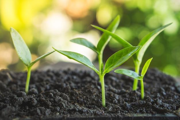 土壌に生長する小さな植物