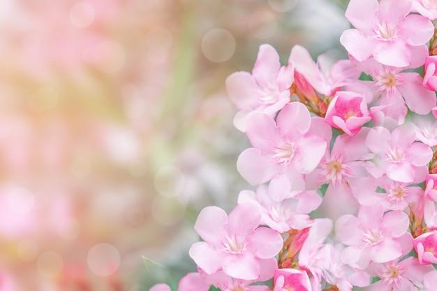 自然に咲くピンクの花の花
