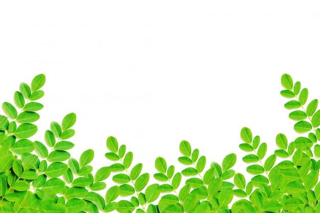 Природа зеленые листья кадр изолировать на белом фоне
