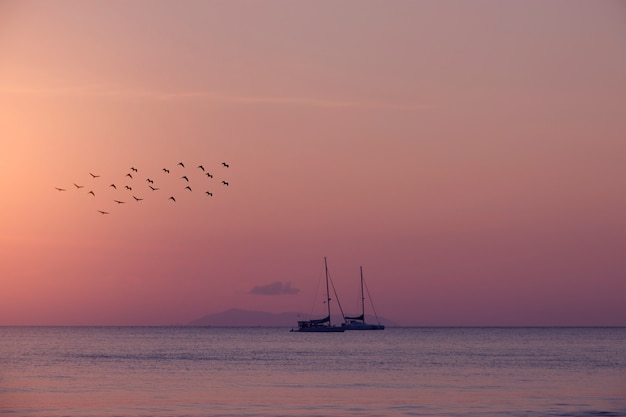 夏の背景の鳥と海のヨット。