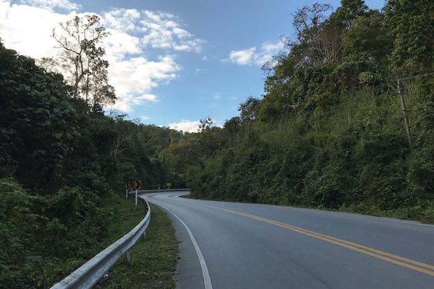 アスファルト道路の森