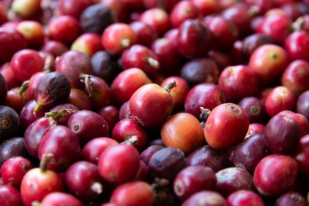 新鮮なコーヒー豆のクローズアップ。