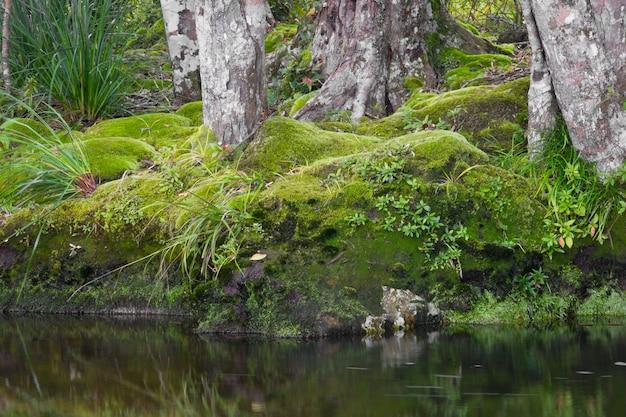 Зеленый мох покрывают старое дерево.