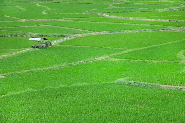 タイの田舎の小屋と田んぼ。