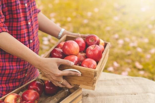高齢者の庭師はリンゴ農場からピッキング後の木箱にリンゴを保持します。