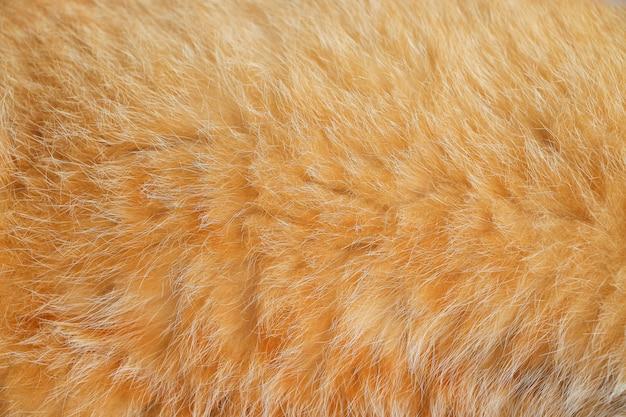 滑らかな茶色の猫の毛皮を閉じる