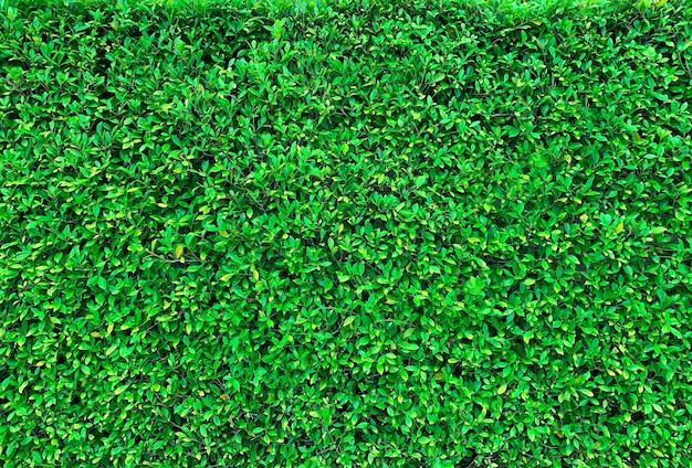 新鮮な緑の草のテクスチャ背景