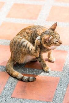 猫がマウスを見て、オレンジ色の床に痒いノミをかける
