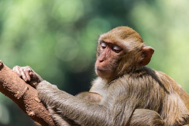 赤ちゃんと母親の猿