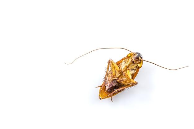 白い背景に死んだゴキブリ