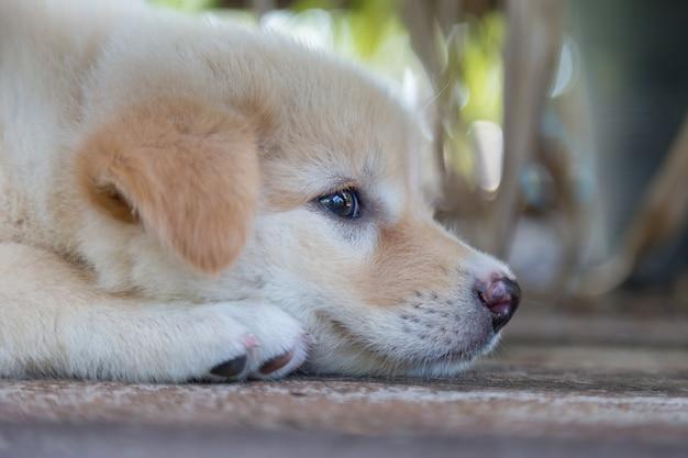 かわいい小さな子犬が座って、床に遊びを探しています