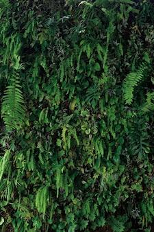 垂直庭園の自然の背景、悪魔のツタ、シダ、フィロデンドロン、ペペロミア、インチ植物、さまざまな種類の熱帯雨林の観葉植物の生きている緑の壁