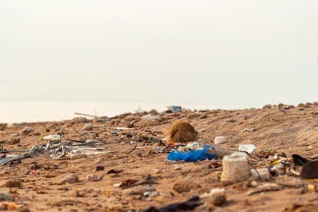 Пластиковый мусор, мусор на земле загрязняет песчаный пляж, море