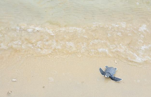 白いビーチで小さなカメ