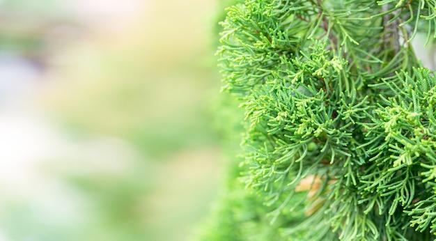 緑背景をぼかした写真の緑の葉の自然ビューをクローズアップ。