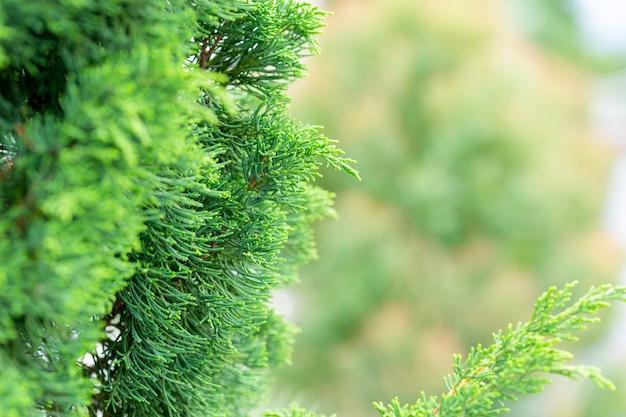 朝庭のぼやけた緑の背景に緑の葉の自然ビューをクローズアップ