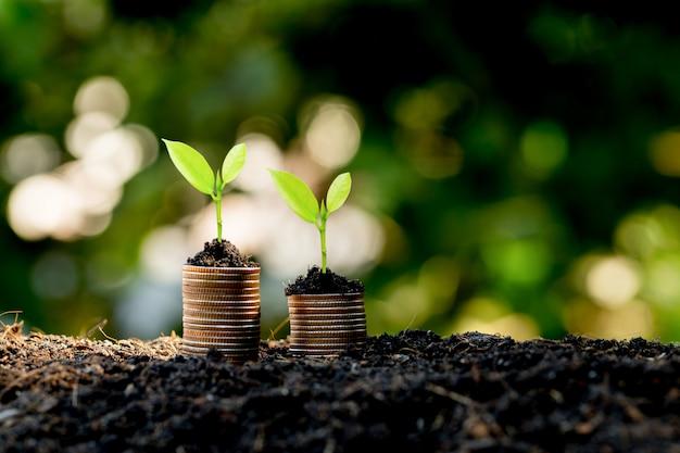 Монеты сложены на земле, а рассада растет сверху