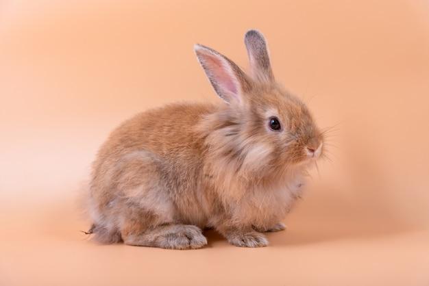 Крошечные милые кролики имеют заостренные уши, коричневый мех и сверкающие глаза.