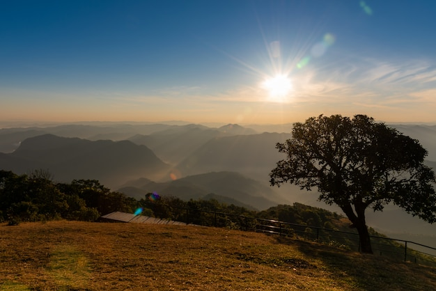 夕方の日差しからの光の風景と高山に生える大きな木。