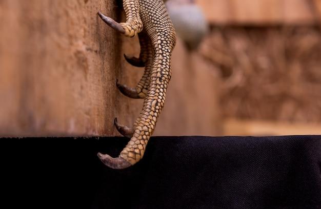 厚い鱗片を持つイグアナの手の質感表面そして鋭い爪
