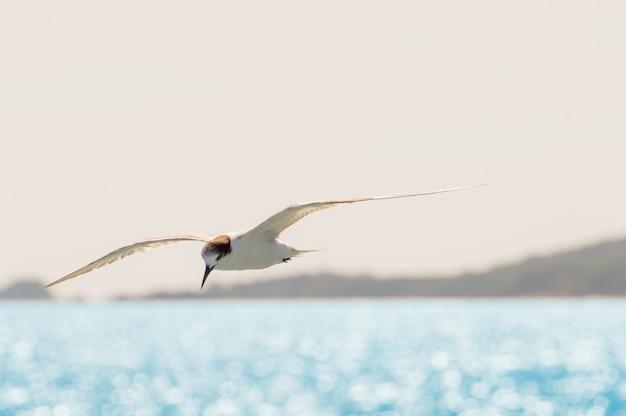 ホワイト・シーガル水面の日差しの上空の空を飛ぶ。