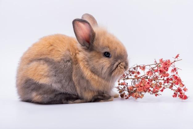 赤ちゃんのかわいいウサギは、先のとがった耳、茶色の毛皮、輝く目とドライフラワーを持っています