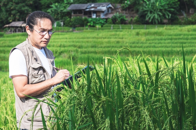 農業調査官、アジア人男性が畑の稲のデータを記録しています
