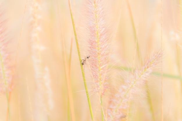 草花のぼんやりとした柔らかい画像、自然の背景のコンセプト