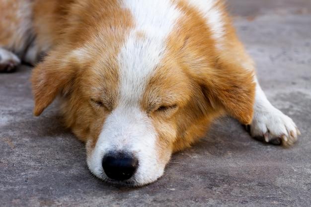 Собака спит и отдыхает