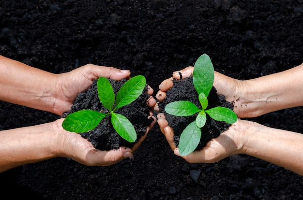 環境地球の日苗木を育てる木々の手の中