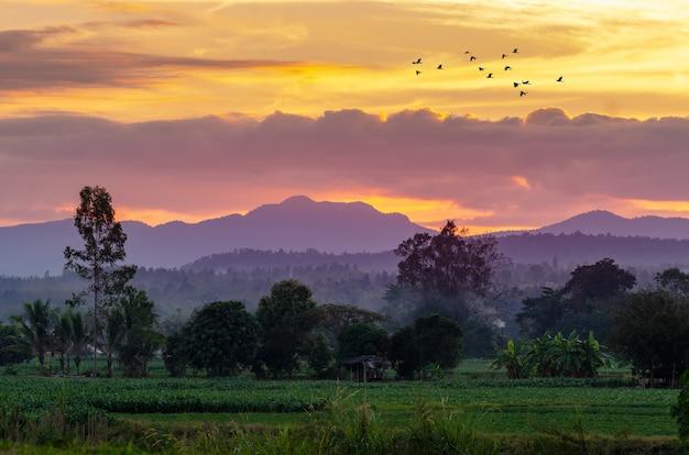 夕方には、黄金の空、チェンマイタイの山の景色