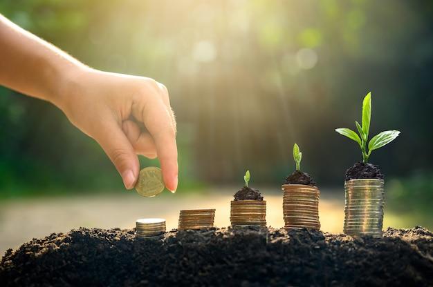 お金の成長お金を節約します。成長するビジネスの概念を示す上層コイン