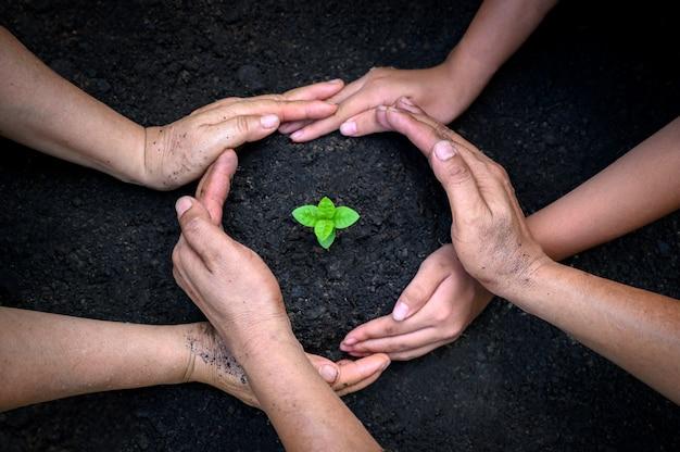 環境アースデー苗木を育てる木の手の中。自然フィールドの草の森林保全の概念にツリーを持っている女性の手