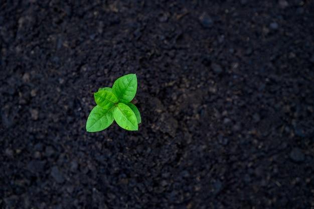 苗の成長の発達自然に朝の光で苗木を植える
