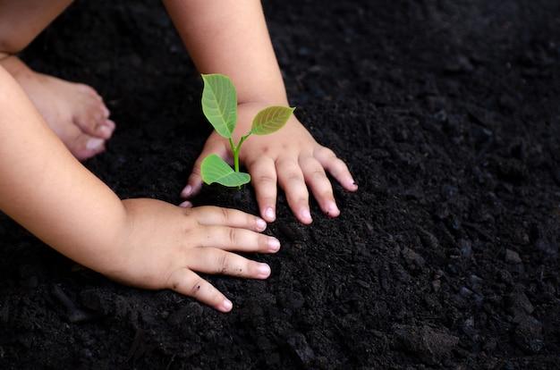 木の苗木赤ちゃんの手暗い地面では、概念は子供たちを環境に移植した