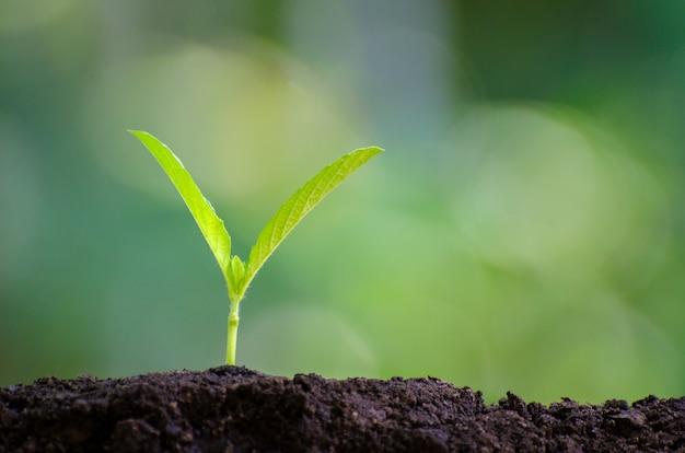 自然の背景に朝の光の苗を植える若い植物