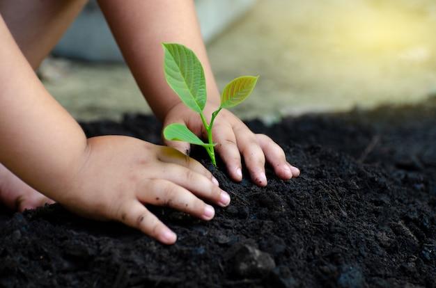木の苗木赤ちゃんの手暗い地面では、コンセプトは子どもを移植