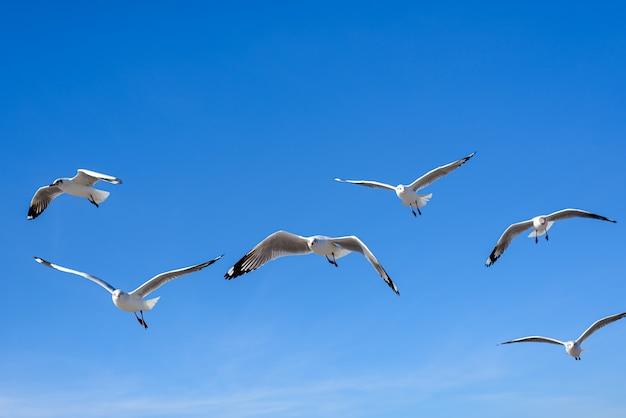 Чайки летают на голубом небе
