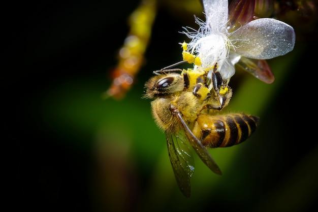 花の上に美しい蜂を閉じます