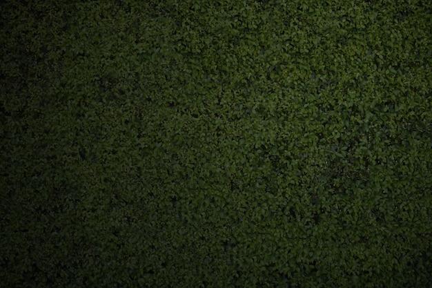 クローズアップダークグリーンの葉の壁の背景