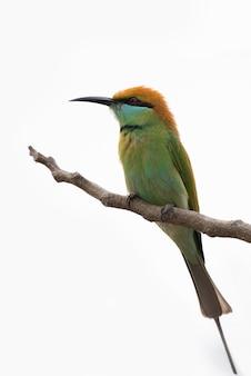 Птица на ветке