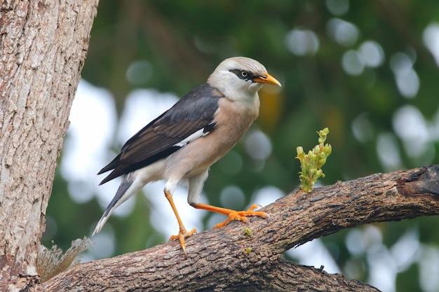 タイ王国の美しい鳥