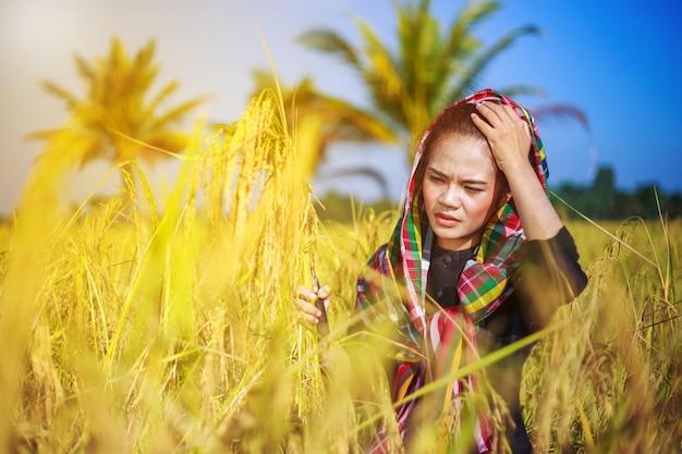 田舎の米収穫に鎌を使っている農夫