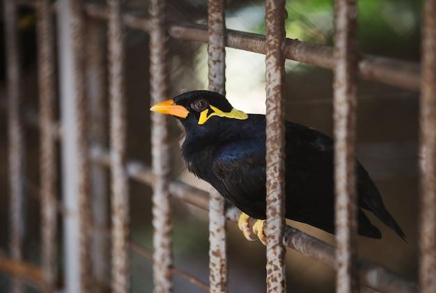 ケージ内のコモンヒルミーナの鳥
