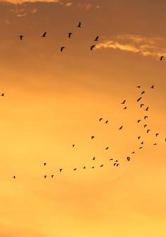 夕焼けの空と雲で飛ぶ鳥のシルエット