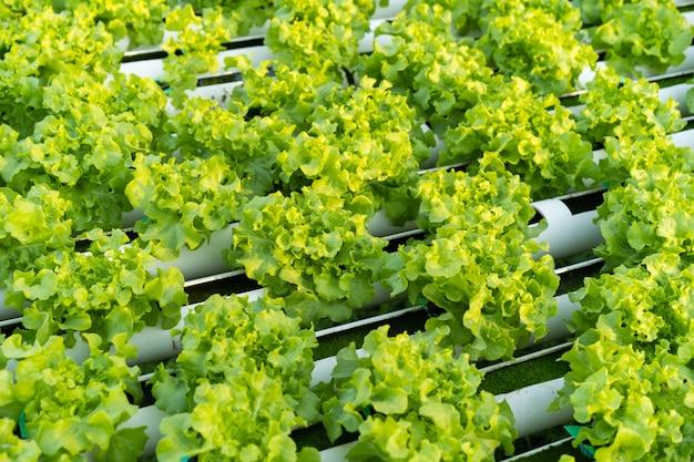 グリーンオーク水耕野菜